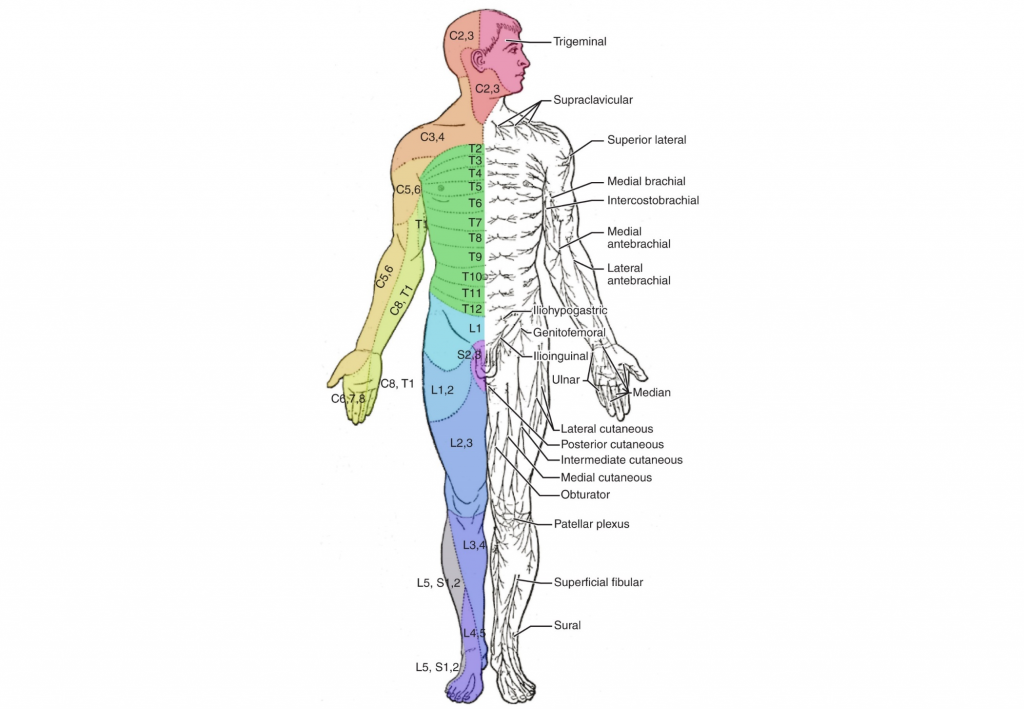 Injury Profiles  Complete Spinal Cord Injury  U2013 Scriptmedic